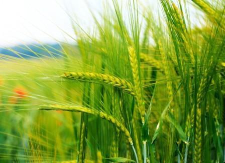 В Тверской области хотят развивать растениеводство и животноводство
