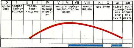 Таблица выполение работ
